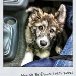 Unser Hund Finn als Beifahrer im Fußraum beim Auto Fahren auf dem Weg an die Elbe