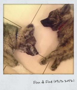 Finn und Fine - erschöpfte Welpen nach dem Spiel