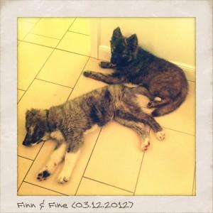 Finn und Fine - erschöpft vom Spielen