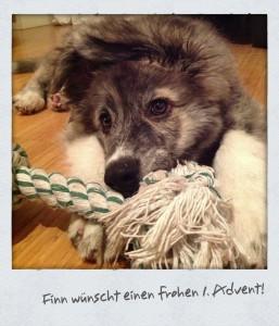 Finn wünscht einen frohen 1. Advent 2012!