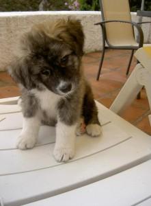 Finn mit wenigen Wochen - da lebte er noch in Spanien und hat uns mit diesem Blick das Herz gebrochen.