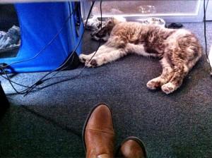 Finn während seiner ersten Tage als Bürohund