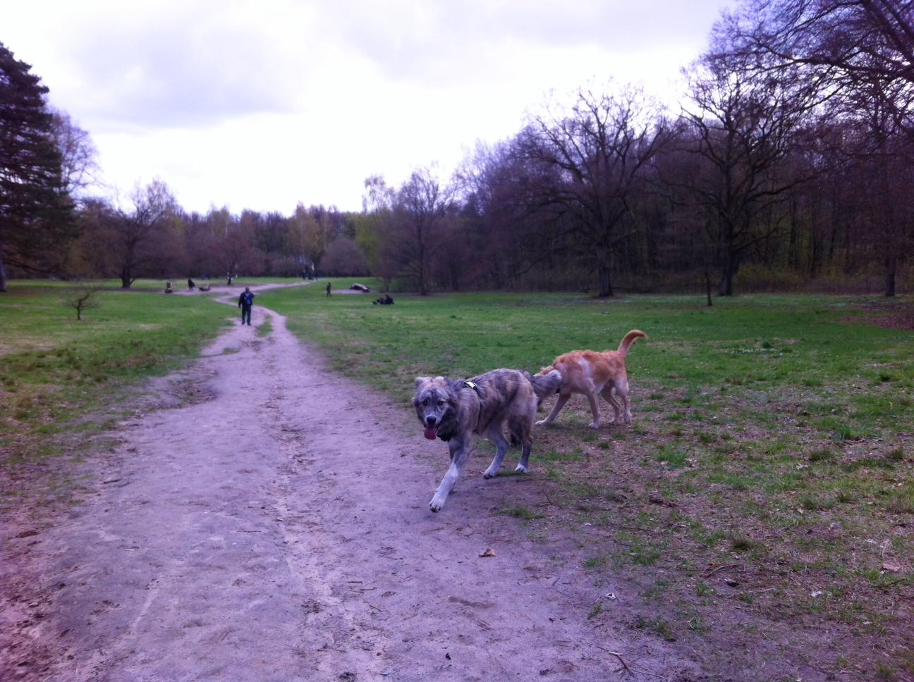 bekanntschaften mit hund Leinfelden-Echterdingen
