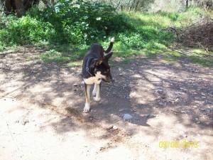 Der Rüde ist Menschen und anderen Hunden gegenüber freundlich und offen.