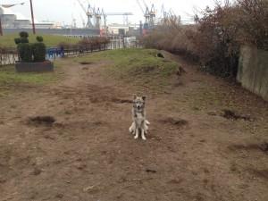 Mit Hund im Antonipark