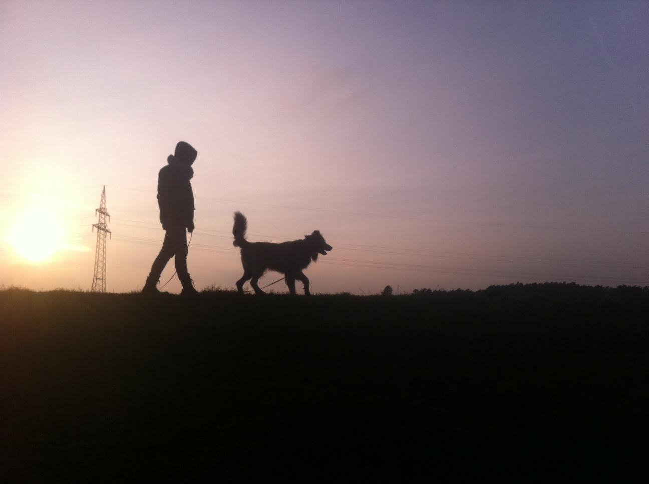 Spaziergang mit Herrchen auf dem Deich an einem der letzten Dezembertage