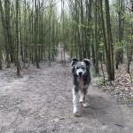 Mit Hund aus Hamburg im Hundeauslauf Scharbeutz